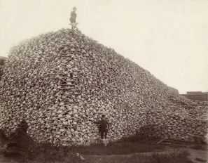 Bison_skull_pile_edit_2